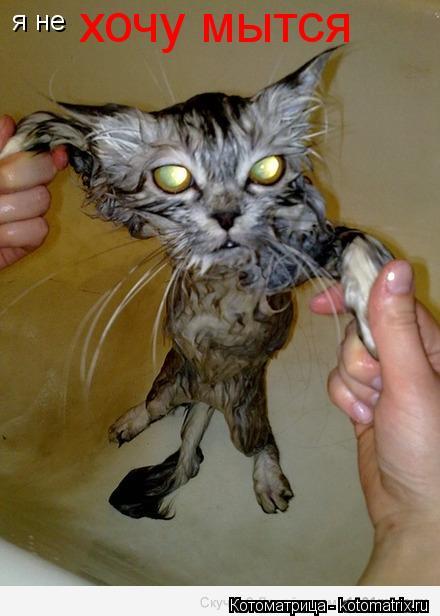 Котоматрица: я не  хочу мытся