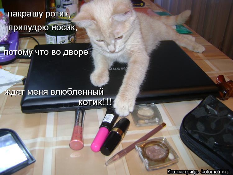 Котоматрица: накрашу ротик, припудрю носик, потому что во дворе  ждет меня влюбленный  котик!!!