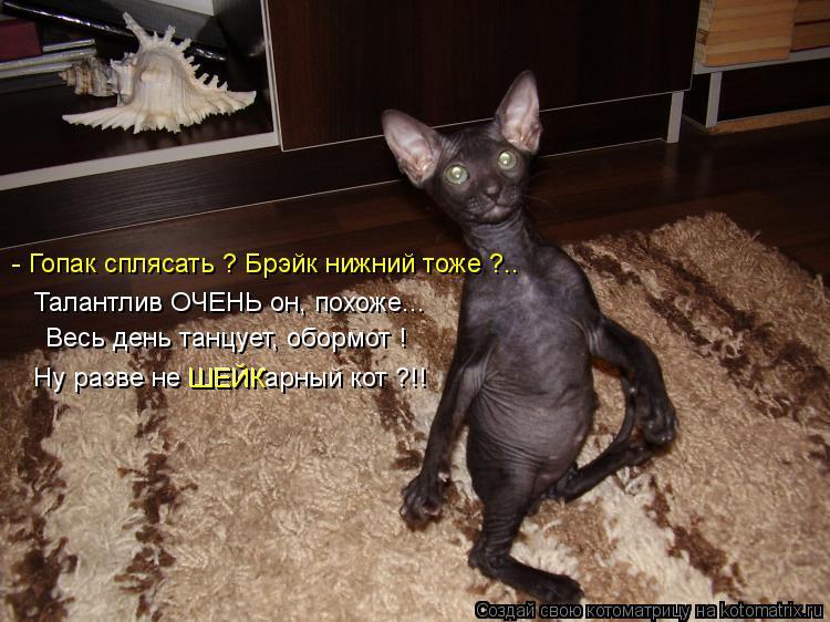 Котоматрица: Весь день танцует, обормот ! Ну разве не ШЕЙКарный кот ?!! - Гопак сплясать ? Брэйк нижний тоже ?.. Талантлив ОЧЕНЬ он, похоже... ШЕЙК