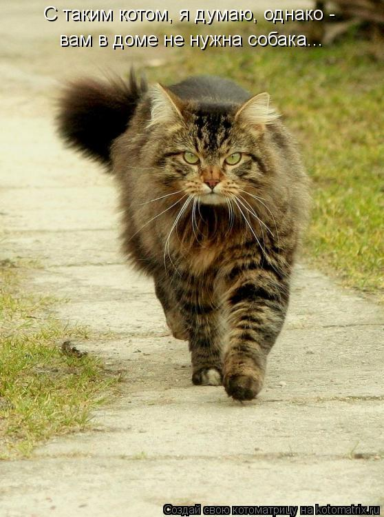 Котоматрица: С таким котом, я думаю, однако -  вам в доме не нужна собака...