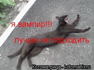 Котоматрица: я вампир!!! лучше не подходить