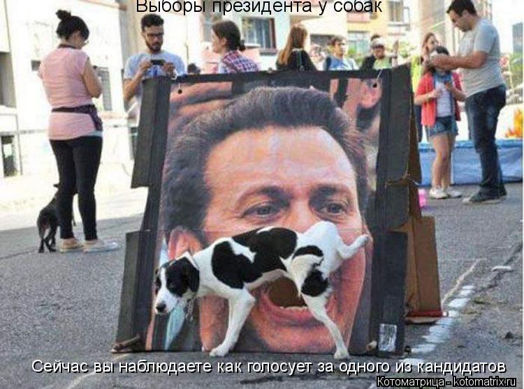 Котоматрица: Выборы президента у собак Сейчас вы наблюдаете как голосует за одного из кандидатов