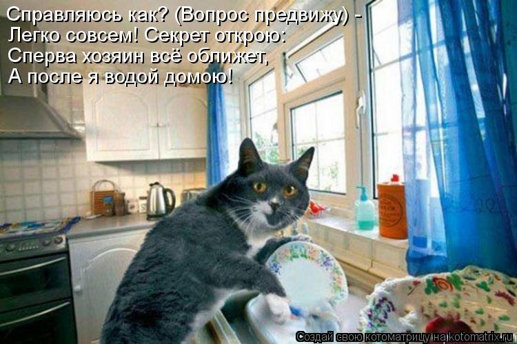 Котоматрица: Справляюсь как? (Вопрос предвижу) - Легко совсем! Секрет открою: Сперва хозяин всё оближет, А после я водой домою!