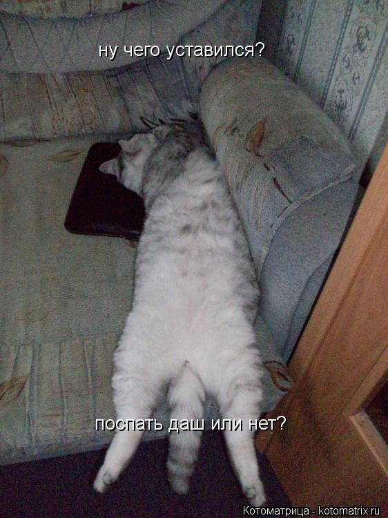 Котоматрица: ну чего уставился? поспать даш или нет?