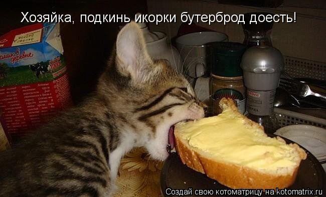 Котоматрица: Хозяйка, подкинь икорки бутерброд доесть!