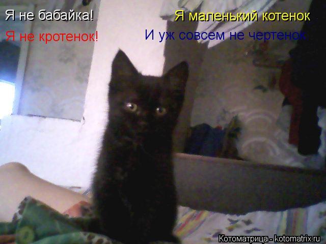 Котоматрица: Я не бабайка! Я не кротенок! Я маленький котенок И уж совсем не чертенок