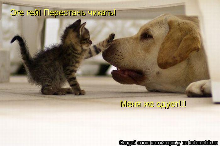 Котоматрица: Эге гей! Перестань чихать! Меня же сдует!!!