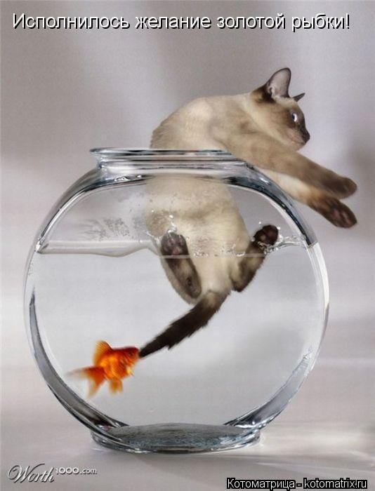 Котоматрица: Исполнилось желание золотой рыбки!