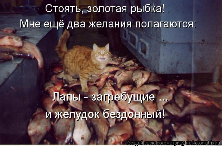 Котоматрица: Мне ещё два желания полагаются: Стоять, золотая рыбка! Лапы - загребущие ... и желудок бездонный!