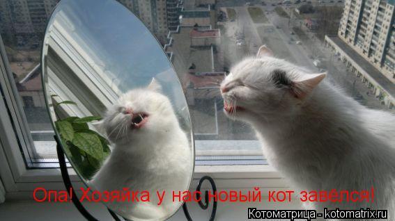 Котоматрица: Опа! Хозяйка у нас новый кот завёлся!