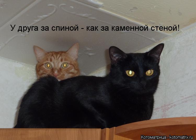 Котоматрица: У друга за спиной - как за каменной стеной!
