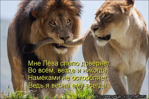 Котоматрица: Мне Лёва слепо доверяет, Во всём, везде и никогда, Намёками не оскорбляет, Ведь я верна ему всегда...