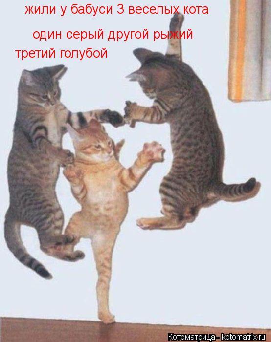 Котоматрица: жили у бабуси 3 веселых кота  один серый другой рыжий третий голубой