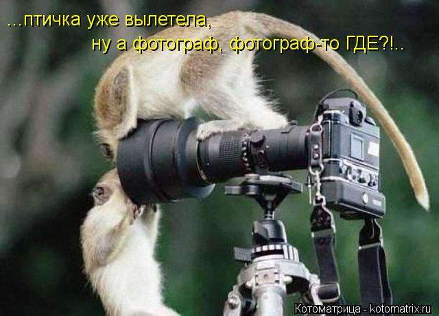 Котоматрица: ...птичка уже вылетела, ну а фотограф, фотограф-то ГДЕ?!..