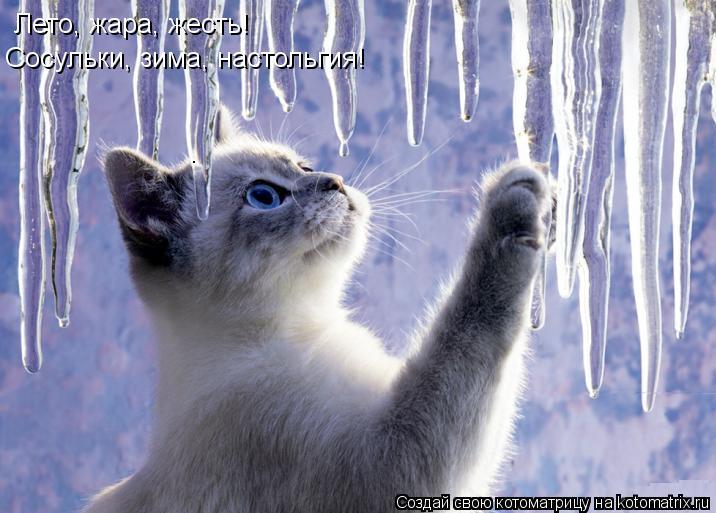 Котоматрица: Лето, жара, жесть! Сосульки, зима, настольгия!
