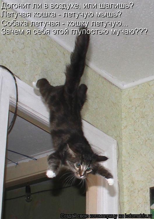 Котоматрица: Зачем я себя этой глупостью мучаю??? Летучая кошка - летучую мышь? Догонит ли в воздухе, или шалишь? Собака летучая - кошку летучую...