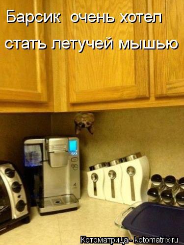 Котоматрица: Барсик  очень хотел  стать летучей мышью