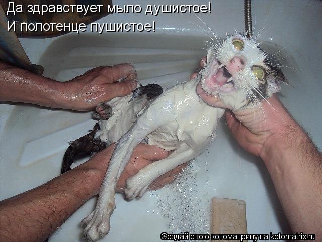 Котоматрица: Да здравствует мыло душистое! И полотенце пушистое!