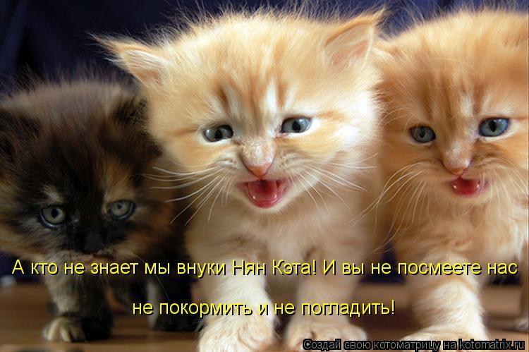 Котоматрица: А кто не знает мы внуки Нян Кэта! И вы не посмеете нас не покормить и не погладить!