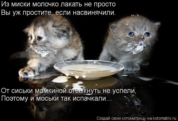 Котоматрица: Из миски молочко лакать не просто Вы уж простите, если насвинячили. От сиськи мамкиной отвыкнуть не успели, Поэтому и моськи так испачкали…