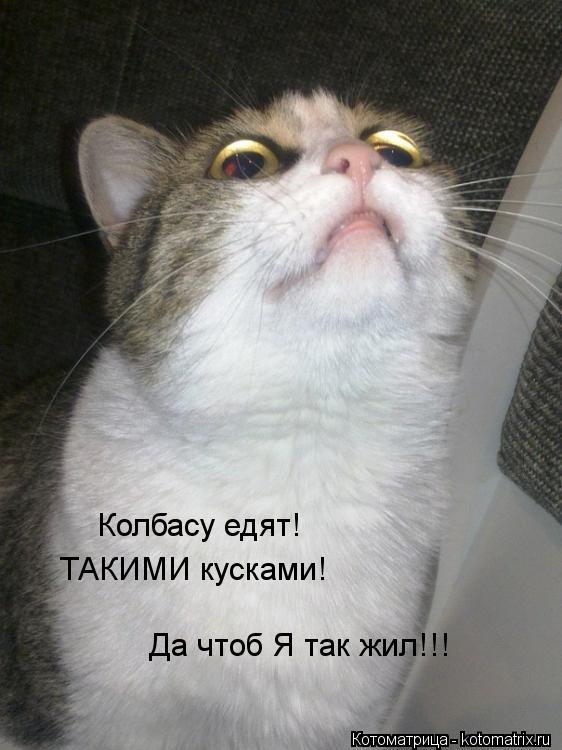 Котоматрица: Колбасу едят! ТАКИМИ кусками! Да чтоб Я так жил!!!