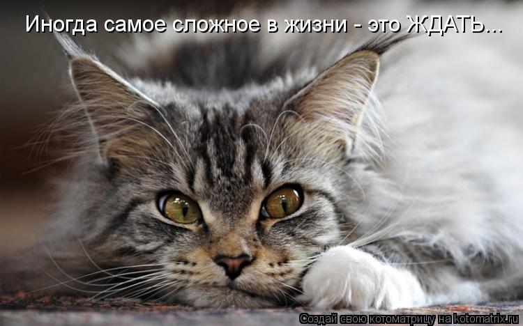 Котоматрица: Иногда самое сложное в жизни - это ЖДАТЬ...