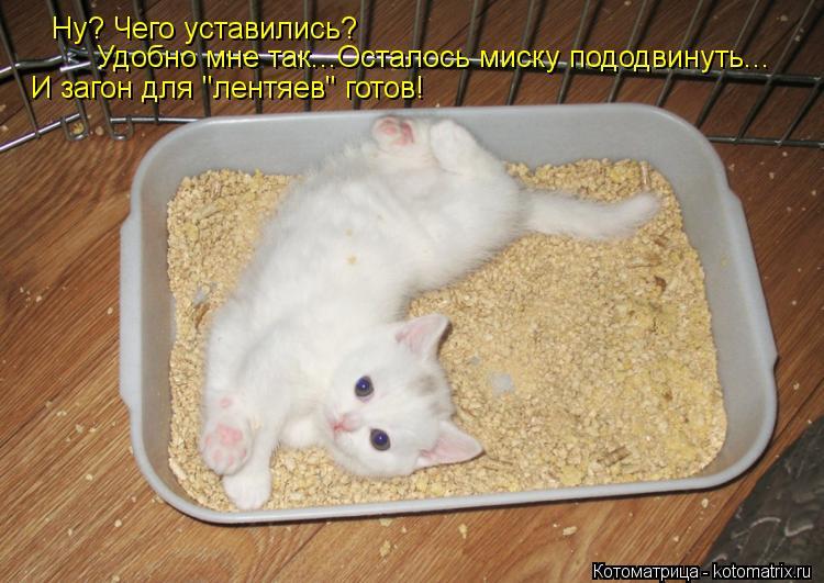 """Котоматрица: Ну? Чего уставились? Удобно мне так...Осталось миску пододвинуть... И загон для """"лентяев"""" готов!"""