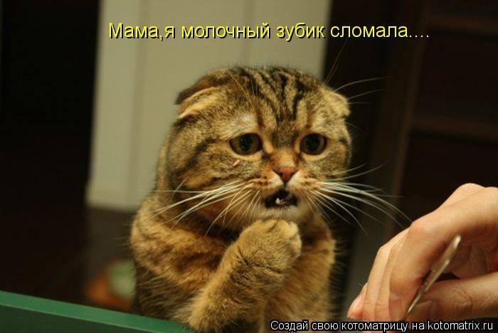 Котоматрица: Мама,я молочный зубик сломала....