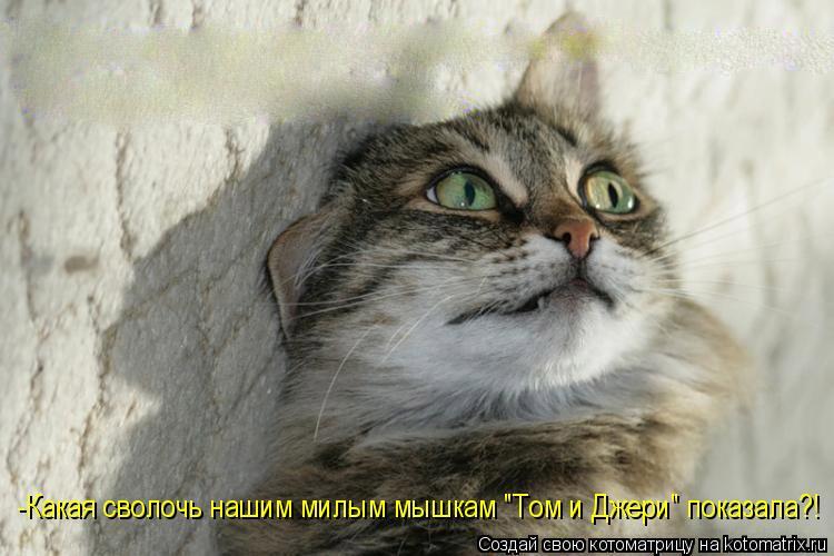 """Котоматрица: -Какая сволочь нашим милым мышкам """"Том и Джери"""" показала?!"""