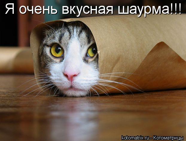 Котоматрица: Я очень вкусная шаурма!!!