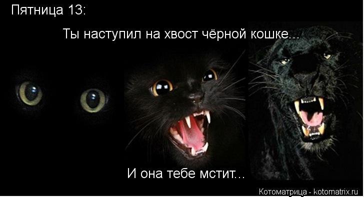 Котоматрица: Пятница 13: Ты наступил на хвост чёрной кошке... И она тебе мстит...