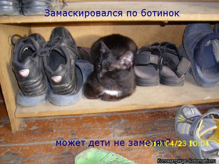 Котоматрица: Замаскировался по ботинок может дети не заметят?