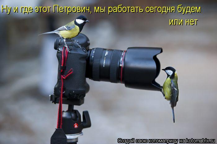 Котоматрица: Ну и где этот Петрович, мы работать сегодня будем или нет
