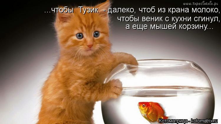 Котоматрица: ...чтобы  Тузик  - далеко, чтоб из крана молоко,  чтобы веник с кухни сгинул, а еще мышей корзину...