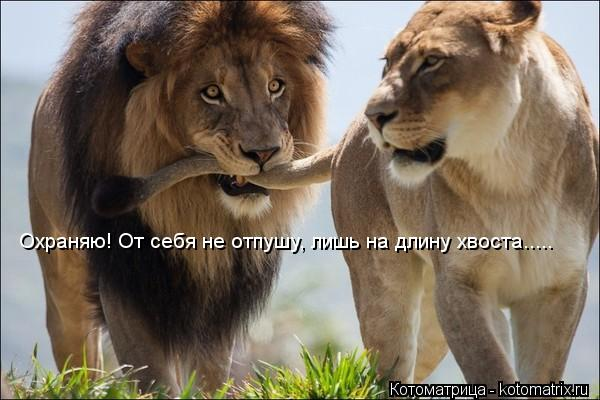 Котоматрица: Охраняю! От себя не отпушу, лишь на длину хвоста.....