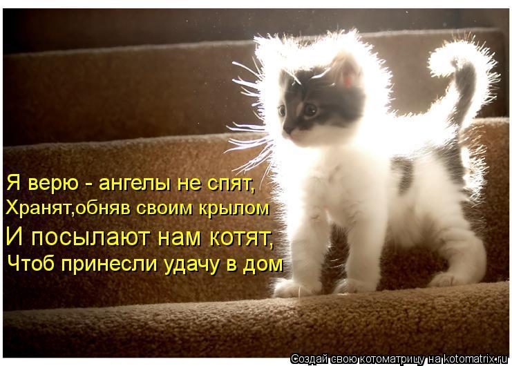 Котоматрица: Я верю - ангелы не спят, Хранят,обняв своим крылом И посылают нам котят, Чтоб принесли удачу в дом