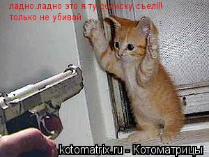 Котоматрица: ладно,ладно это я ту сосиску съел!!! только не убивай