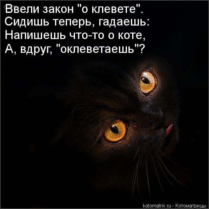 """Котоматрица: Ввели закон """"о клевете"""". Сидишь теперь, гадаешь: Напишешь что-то о коте, А, вдруг, """"оклеветаешь""""?"""