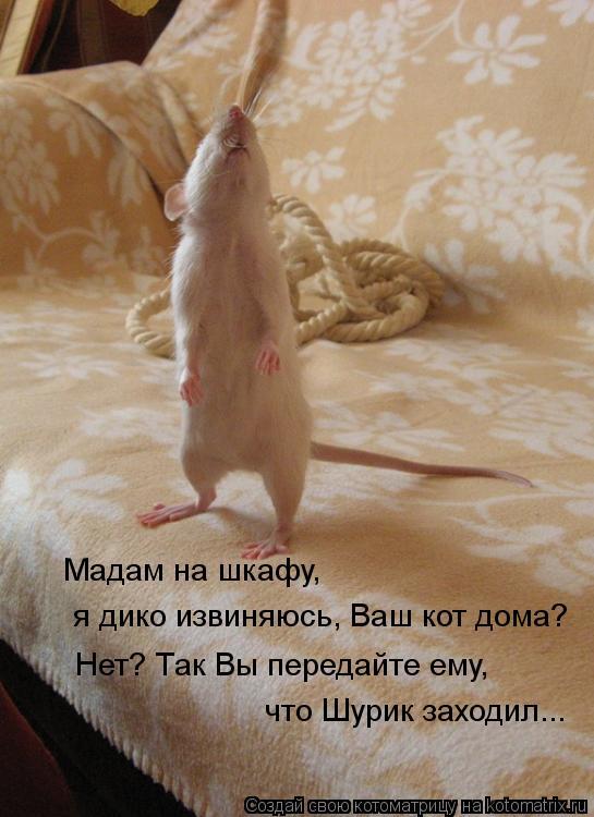 Котоматрица: Мадам на шкафу,  я дико извиняюсь, Ваш кот дома? Нет? Так Вы передайте ему,  что Шурик заходил...