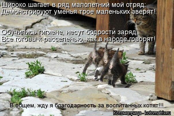 Котоматрица: Широко шагает в ряд малолетний мой отряд: Демонстрируют уменья трое маленьких зверят! Обучились гигиене, несут бодрости заряд, Все готовы к