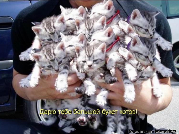 Котоматрица: Дарю тебе большой букет котов!