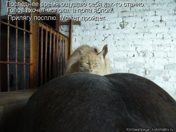Котоматрица: Последнее время ощущаю себя как-то станно: Последнее время ощущаю себя как-то станно: Голова хочет молока, а попа яблок.. Прилягу посплю. Мож