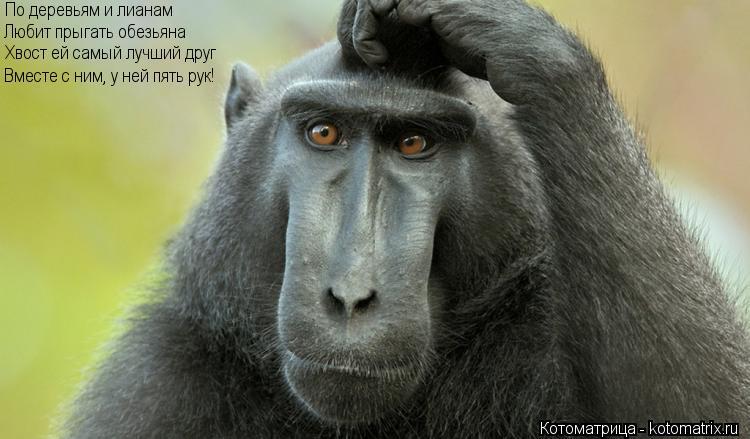 Котоматрица: По деревьям и лианам Любит прыгать обезьяна Хвост ей самый лучший друг Вместе с ним, у ней пять рук!