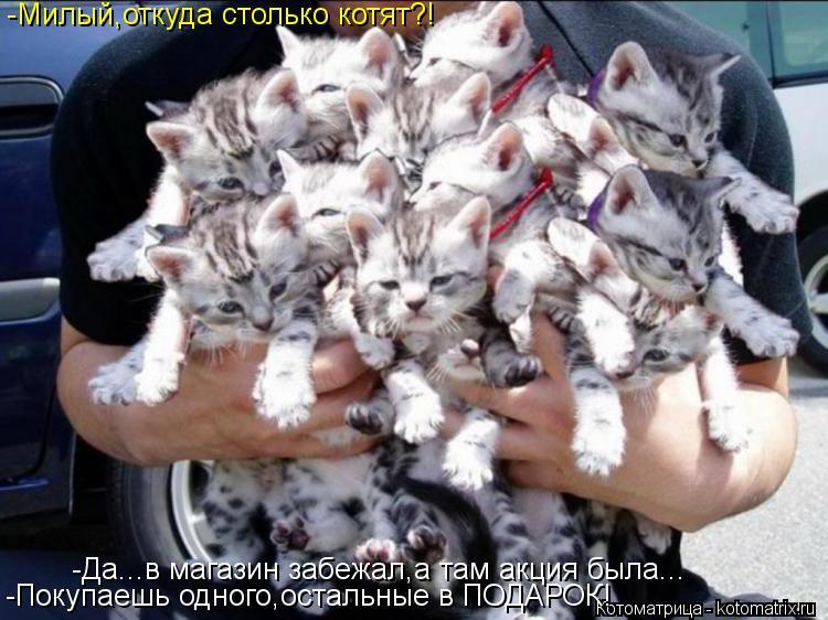 Котоматрица: -Милый,откуда столько котят?! -Покупаешь одного,остальные в ПОДАРОК! -Да...в магазин забежал,а там акция была...