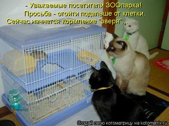 """Котоматрица: - Уважаемые посетители ЗООпарка!  Просьба - отойти подальше от клетки,  Сейчас начнется кормление """"зверя""""..."""