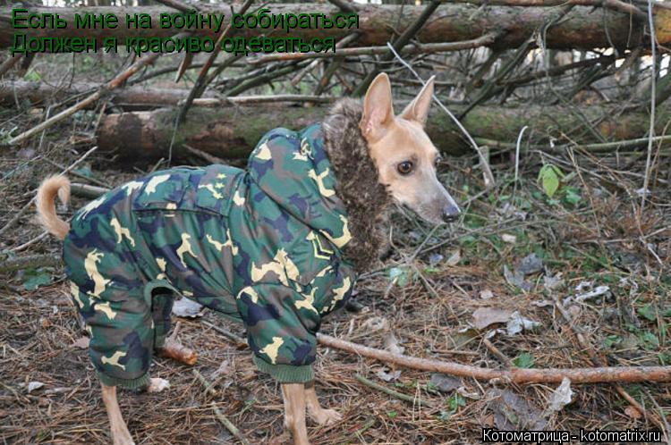Котоматрица: Есль мне на войну собираться Должен я красиво одеваться