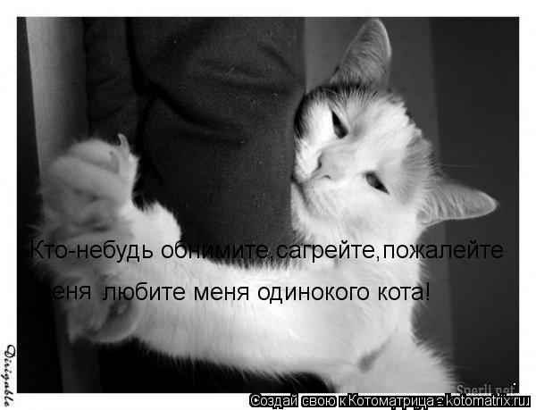 Котоматрица: Кто-небудь обнимите,сагрейте,пожалейте  меня любите меня одинокого кота!
