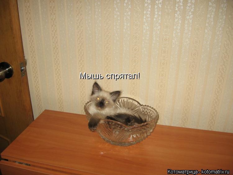 Котоматрица: Мышь спрятал!