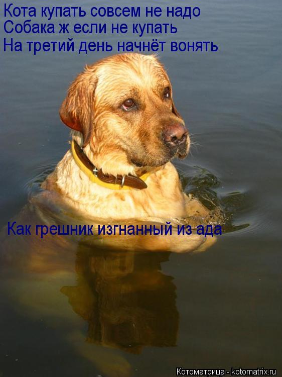 Котоматрица: Кота купать совсем не надо Собака ж если не купать На третий день начнёт вонять Как грешник изгнанный из ада