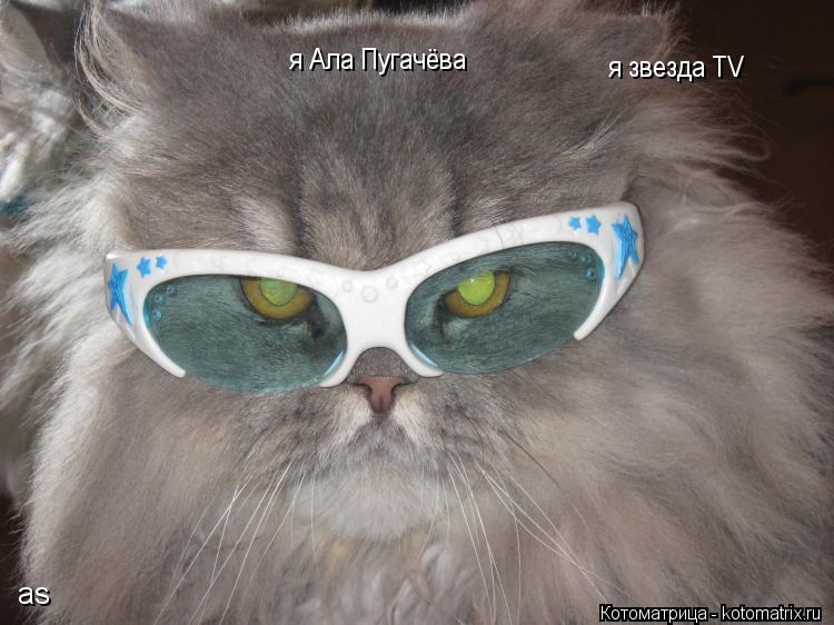 Котоматрица: я звезда TV я Ала Пугачёва as